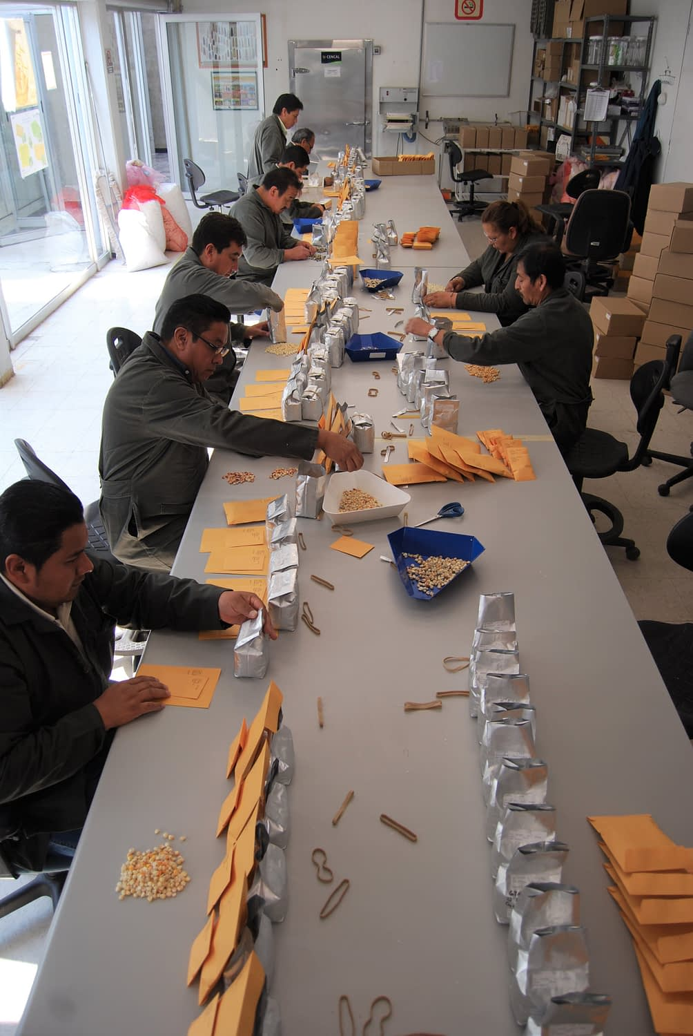 CIMMYT maize germplasm bank staff preparing the order for the repatriation of Guatemalan seed varieties. (Photo: CIMMYT)