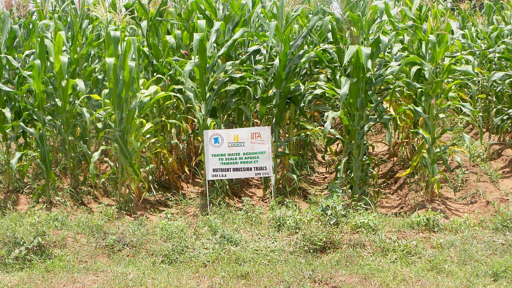 One of the sites of nutrient omission trials, used during the development phase of the Nutrient Expert tool in Nigeria. (Photo: Oyakhilomen Oyinbo)