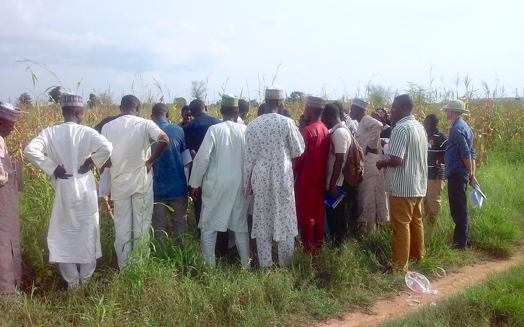 Members of the survey team participate in a training session at Bayero University Kano, Nigeria. (Photo: Oyakhilomen Oyinbo)