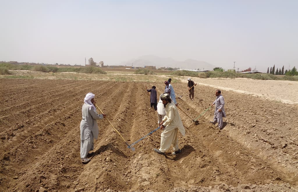 A maize field is prepared manually for planting in Balochistan province, Pakistan. (Photo: CIMMYT)