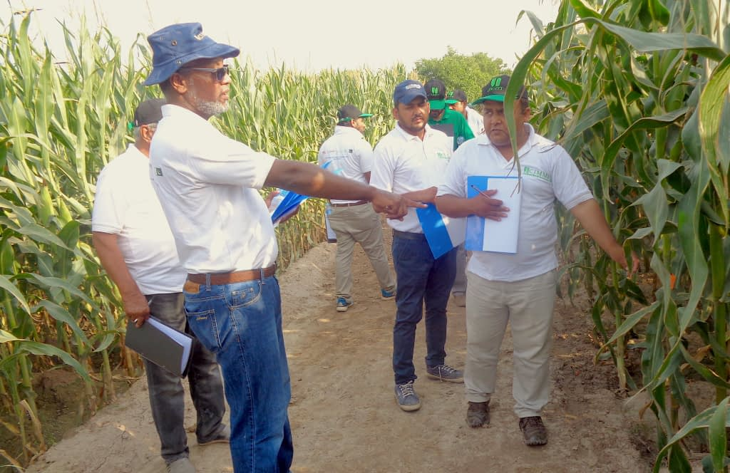 """""""The testing of diversified maize products and release of new varieties represent encouraging progress,"""" said AbduRahman Beshir (foreground), CIMMYT maize seed system specialist, speaking during a traveling seminar, """"but only advances in quality seed production and a competitive seed business at scale, with a strong case for investment by the private sector, will allow farmers to benefit."""" (Photo: Waheed Anwar/CIMMYT)"""