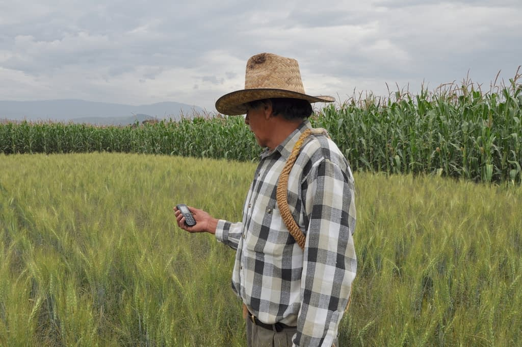 A farmer requests weather information via SMS.