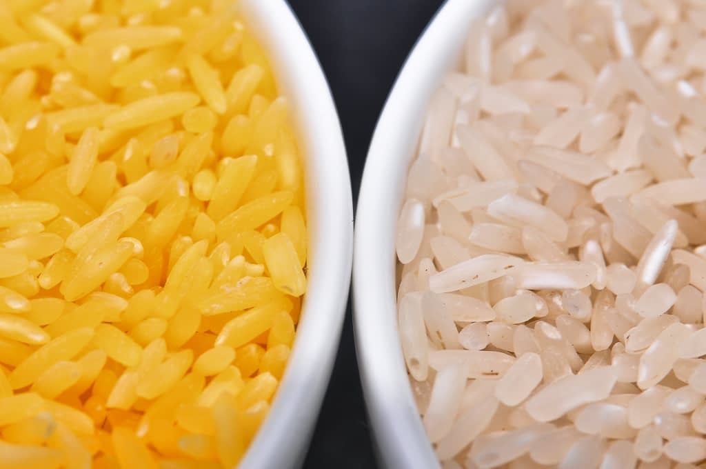 Golden Rice grain (left) compared to white rice grain. Golden Rice is unique because it contains beta carotene, giving it a golden color. (Photo: IRRI)