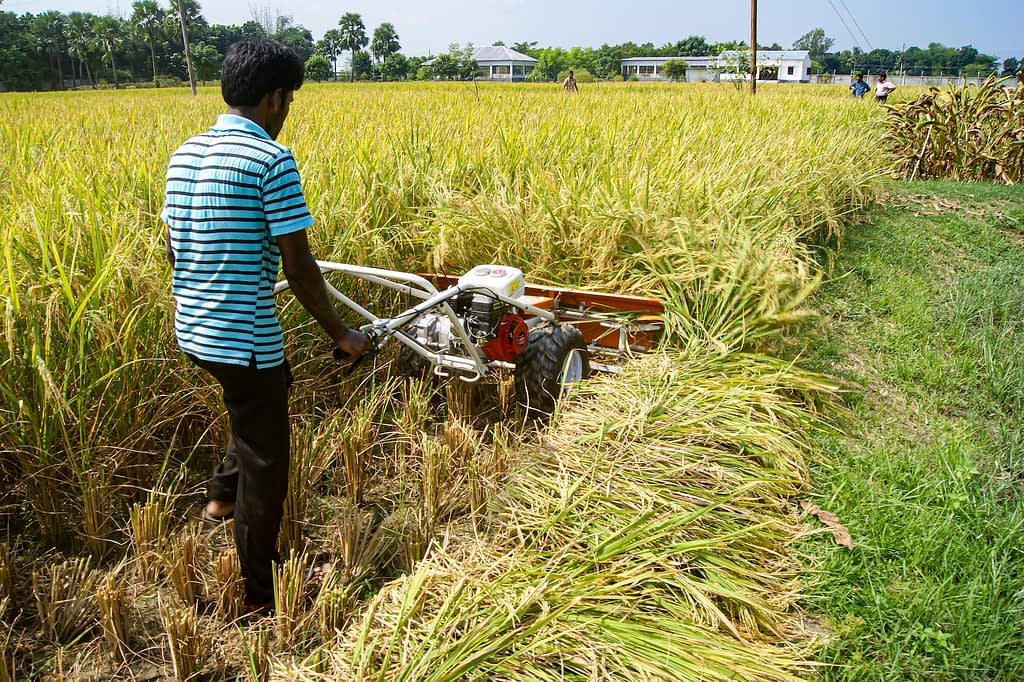 An operator demonstrates the use of a reaper in Bangladesh. (Photo: CIMMYT)