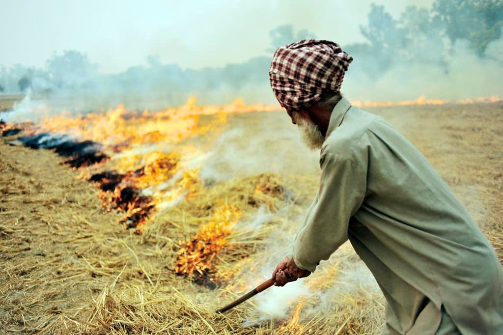 A farmer burns rice residues after harvest to prepare the land for wheat planting around Sangrur, Punjab, India. (Photo: Neil Palmer/CIAT)