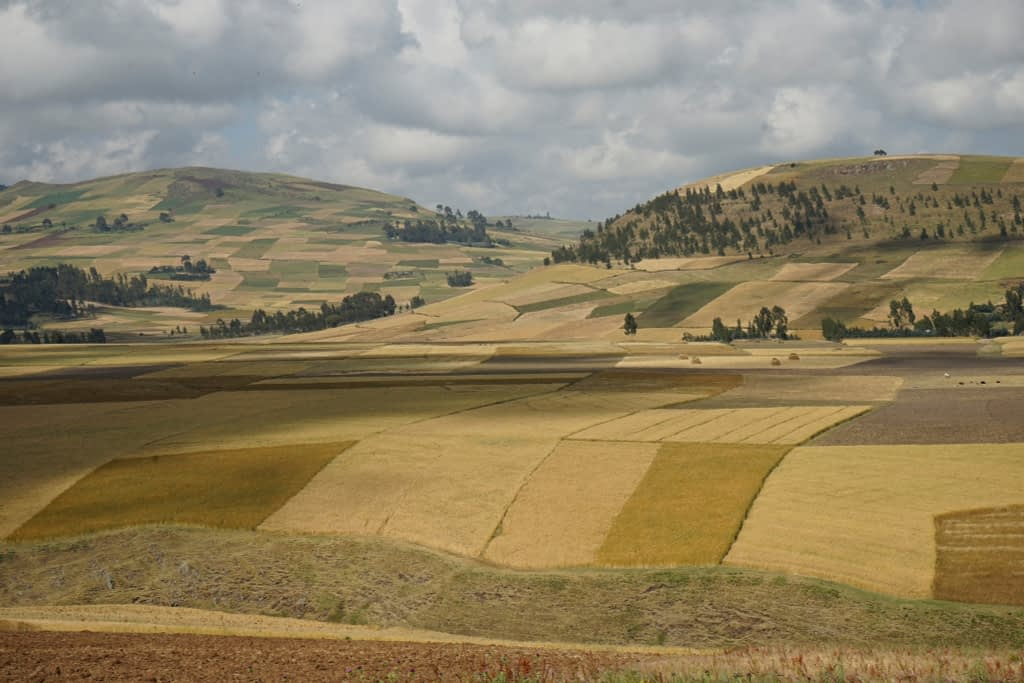 Wheat fields in the Arsi highlands, Ethiopia, 2015. (Photo: CIMMYT/ Peter Lowe)
