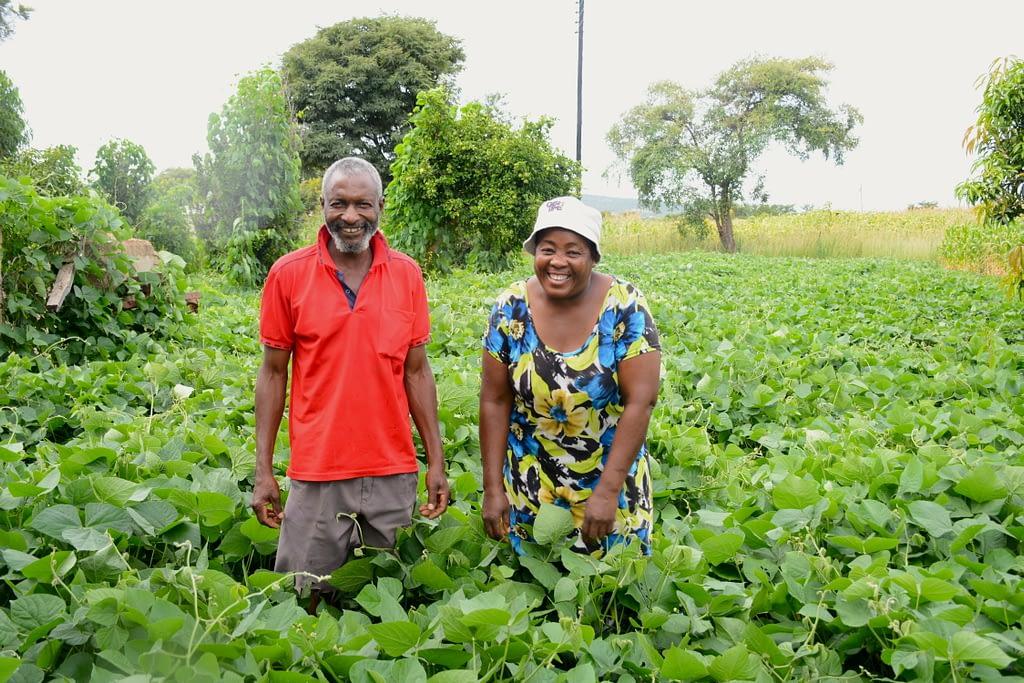 Kumbirai Chimbadzwa (left) and Lilian Chimbadzwa stand on their field growing green manure cover crops. (Photo: Shiela Chikulo/CIMMYT)