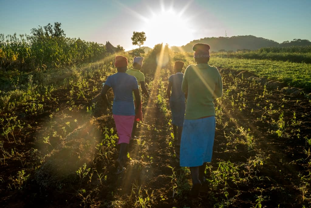 Farmers going home for breakfast in Motoko district, Zimbabwe. (Photo: Peter Lowe/CIMMYT)