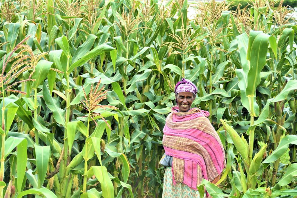 "A maize farmer in southern Ethiopia. (Photo: <a href=""https://flic.kr/p/2hp5uoS"">S. Samuel/CCAFS</a>)"
