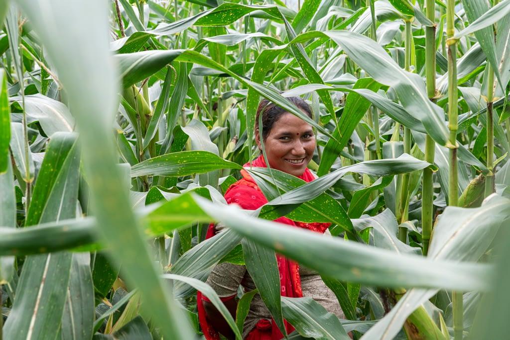 Sita Kumari, a farmer, stands on a maize field in Nepal. (Photo: C. de Bode/CGIAR)