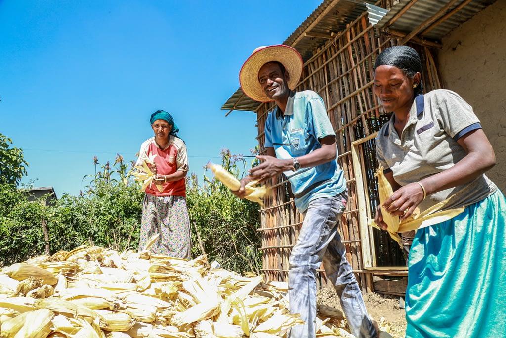 Usman Kadir and his family de-husk maize on their farm in Ethiopia. (Photo: Apollo Habtamu/ILRI)
