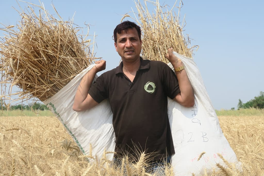 Gokul Paudel holds up two bags of wheat crop-cuts in a farmer's field in India. (Photo: CIMMYT)