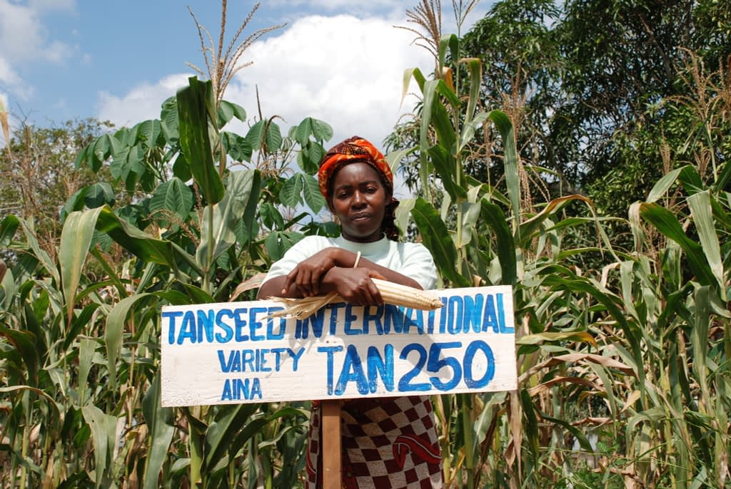 A farmer in Tanzania stands in front of her maize plot where she grows improved, drought tolerant maize variety TAN 250. (Photo: Anne Wangalachi/CIMMYT)