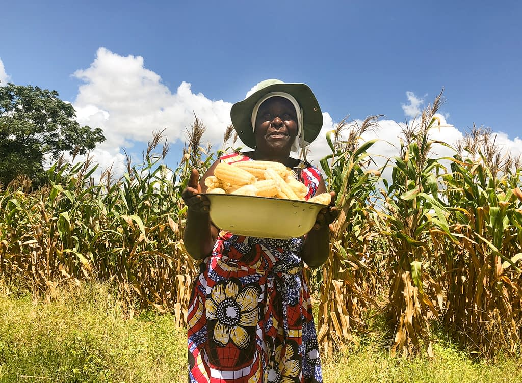 Farmer Edma Shanguri holds a harvest of Ms44 hybrids from an on-farm trial in Murewa, Zimbabwe. (Photo: J. Cairns/CIMMYT)