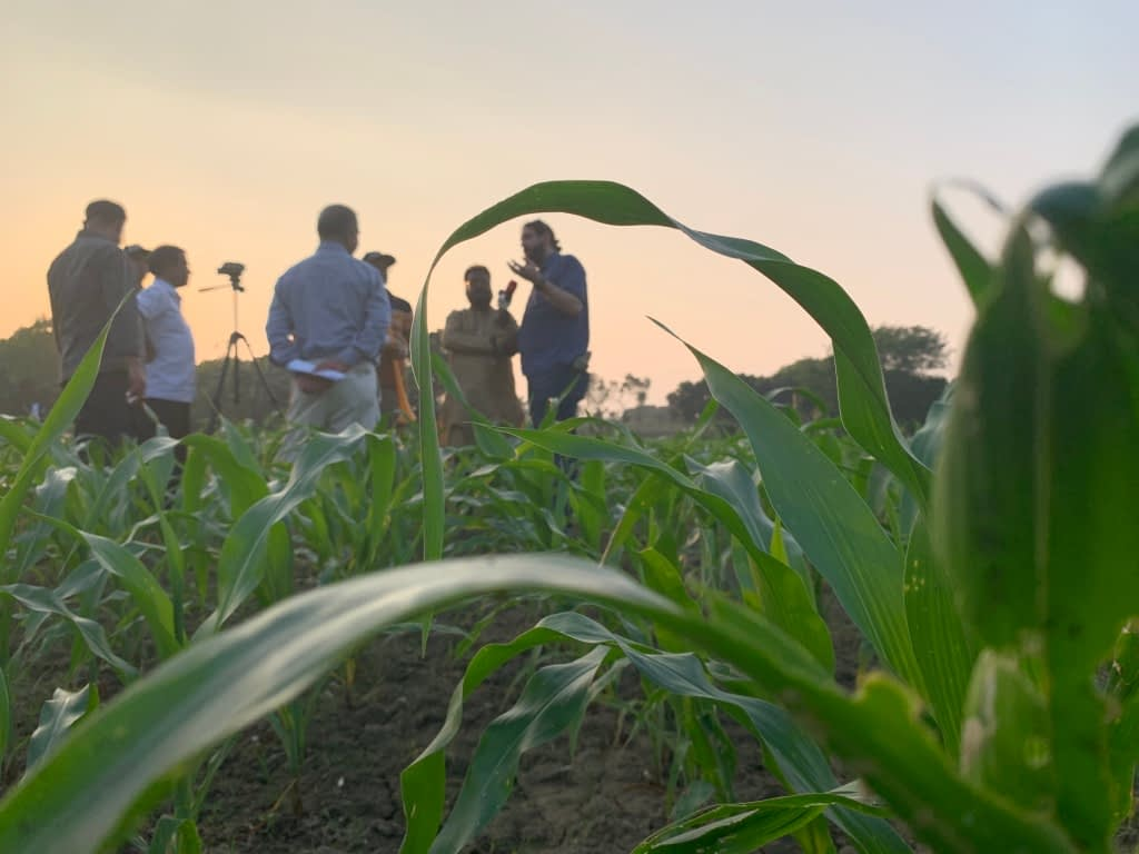 Reporters interview trainers in the field during the Fighting Back against Fall Armyworm workshops. (Photo: Shafiq Islam)