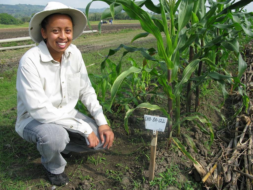 Aida Zewdu Kebede, a PhD student at the University of Hohenheim, sits next to an experimental plot for doubled haploid maize in Agua Fría, Mexico. (Photo: Thomas Lumpkin/CIMMYT)