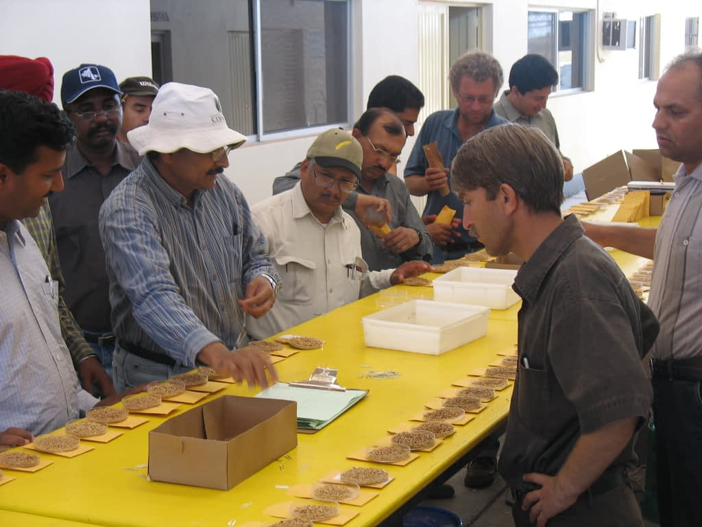 Ravi Singh (left, in striped shirt) shows students how to score the seed of freshly-harvested wheat lines at CIMMYT's experimental station near Ciudad Obregón, Mexico, during the international Wheat Improvement Course in 2007. (Photo: CIMMYT)