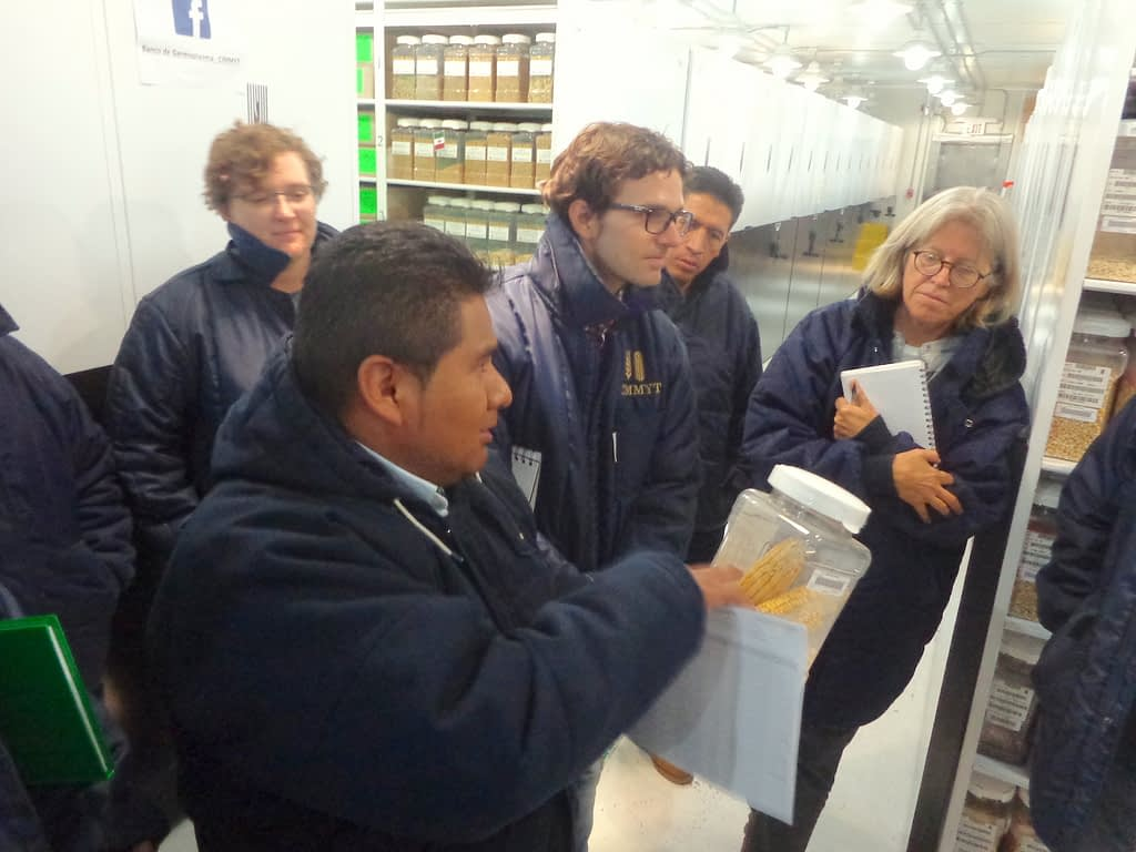 Costich and members of the Maize Collection team hosting Pedro Bello from UC Davis (center, glasses) at the CIMMYT Germplasm Bank in Texcoco, Mexico, for a workshop on seed longevity and conservation techniques.