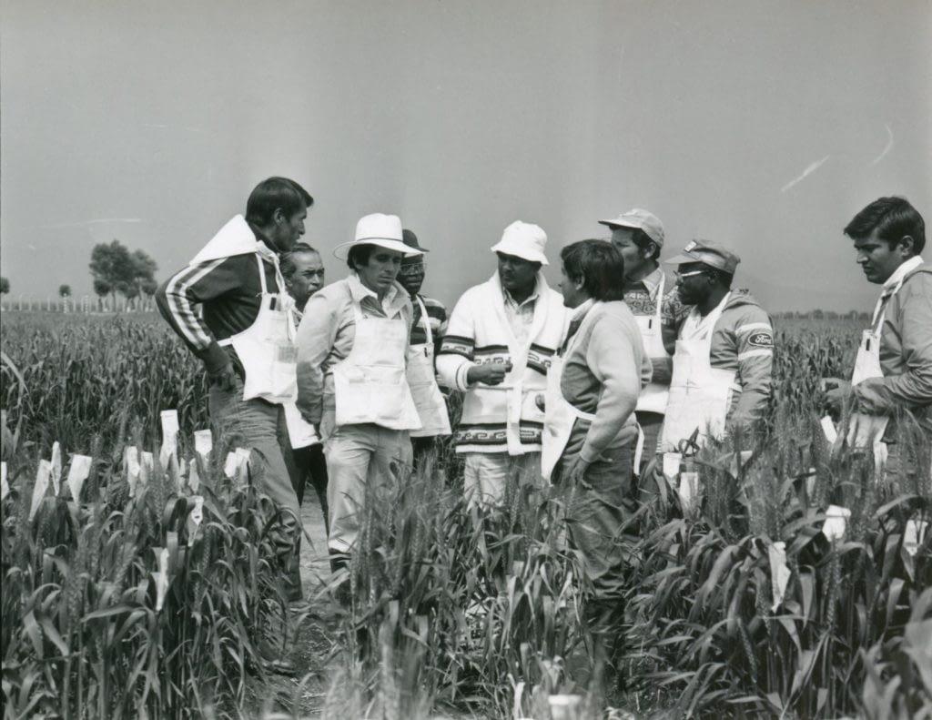Wheat training activities at Toluca station circa 1980. (Photo: CIMMYT)