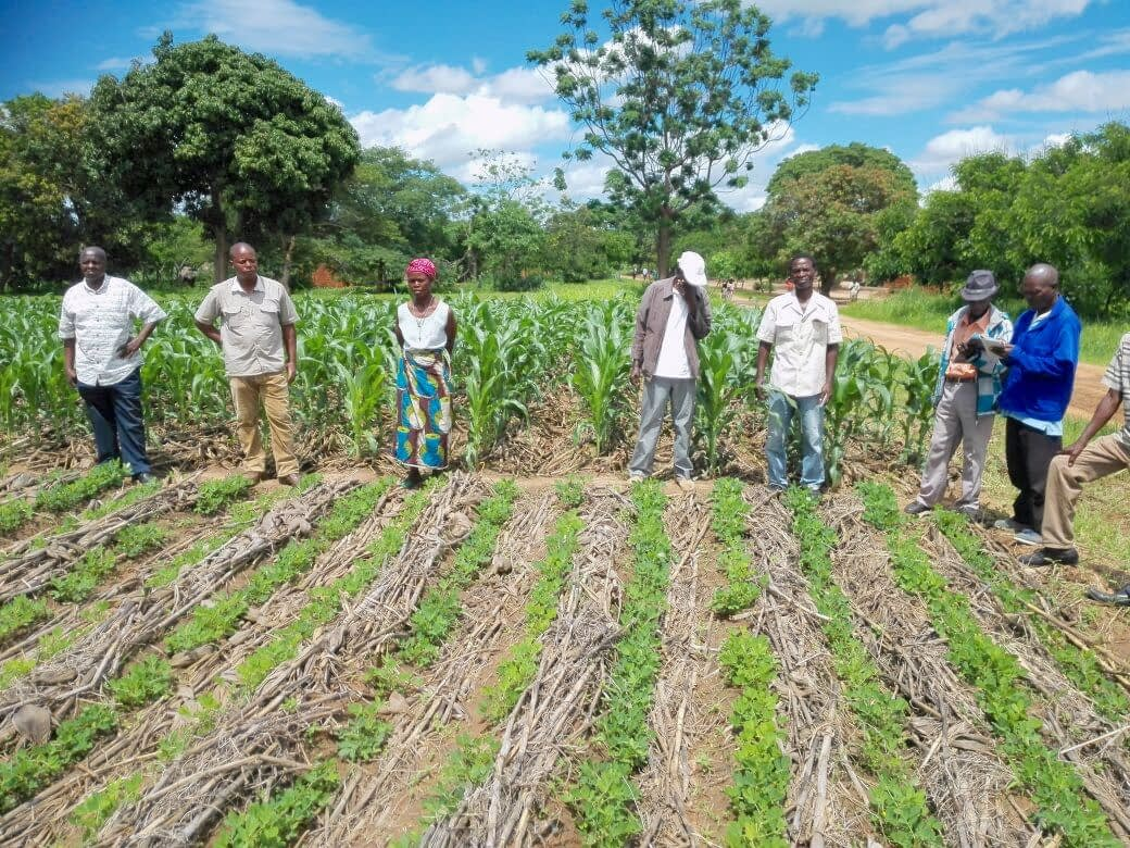 Farmers visit a field from Total LandCare demonstrating conservation agriculture for sustainable intensification practices in Angónia, Tete province, Mozambique.