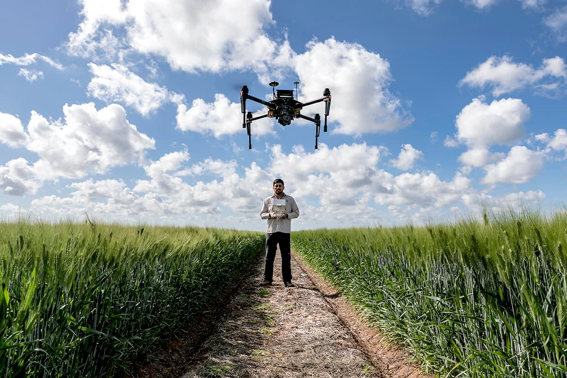 Remote sensing specialist Francisco Pinto operates a UAV at CIMMYT's research station in Ciudad Obregón, in Mexico's Sonora state.