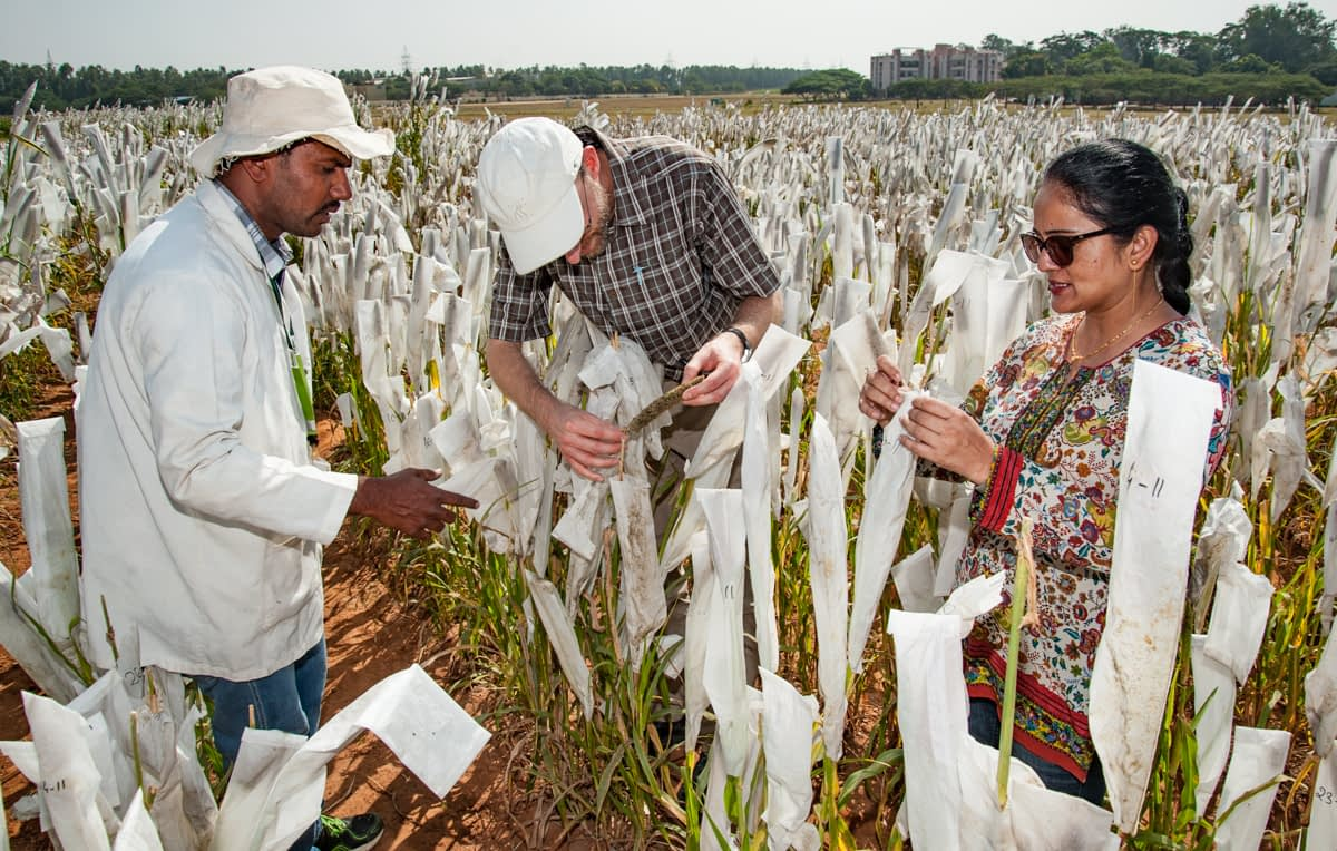 Shivali Sharma (right), pre-breeding research leader at ICRISAT, explains pearl millet pollination techniques to visitors at the ICRISAT campus. (Photo: Michael Major/Crop Trust)