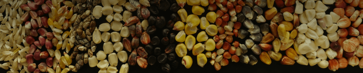 Maize seed request