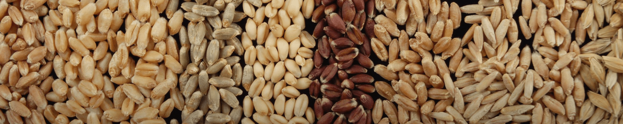 Wheat seed request