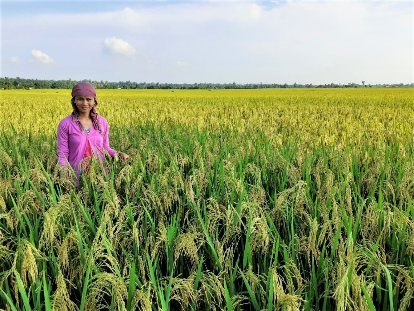 Women stands in rice field.