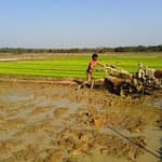 Land preparation on a rice field with a two-wheel tractor. (Photo: Vedachalam Dakshinamurthy/CIMMYT)