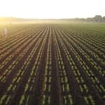 Wheat fields at Toluca station. (Photo: Fernando Delgado/CIMMYT)