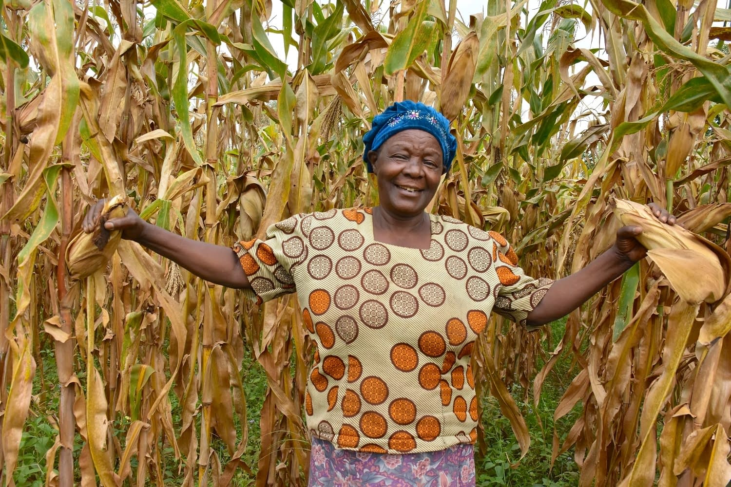 Alice Nasiyimu stands in front of a drought-tolerant maize plot at her family farm in Bungoma County, in western Kenya. (Photo: Joshua Masinde/CIMMYT)