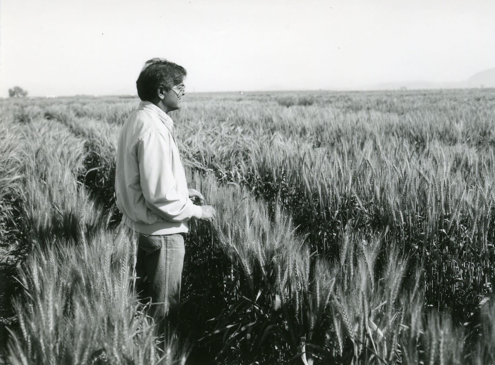 Sanjaya Rajaram at the Centro de Investigaciones Agrícolas del Noroeste (CIANO) in Ciudad Obregón, in Mexico's Sonora state. (Photo: Gil Olmos/CIMMYT)