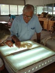 Scientists use a light box to select maize seed expressing the quality protein trait. Light is projected through the seed, and kernels that appear dark at the base but translucent elsewhere are prime QPM candidates.