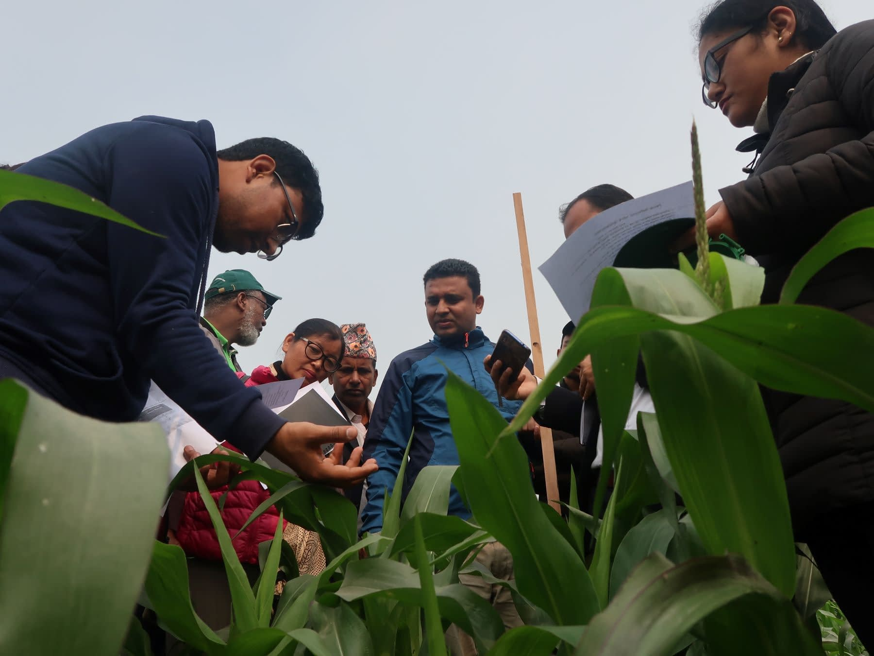 Participants in one of the trainings learn how to scout and collect data on fall armyworm in a maize field. (Photo: Bandana Pradhan/CIMMYT)