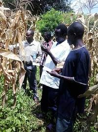 Farmers-selecting-varieties