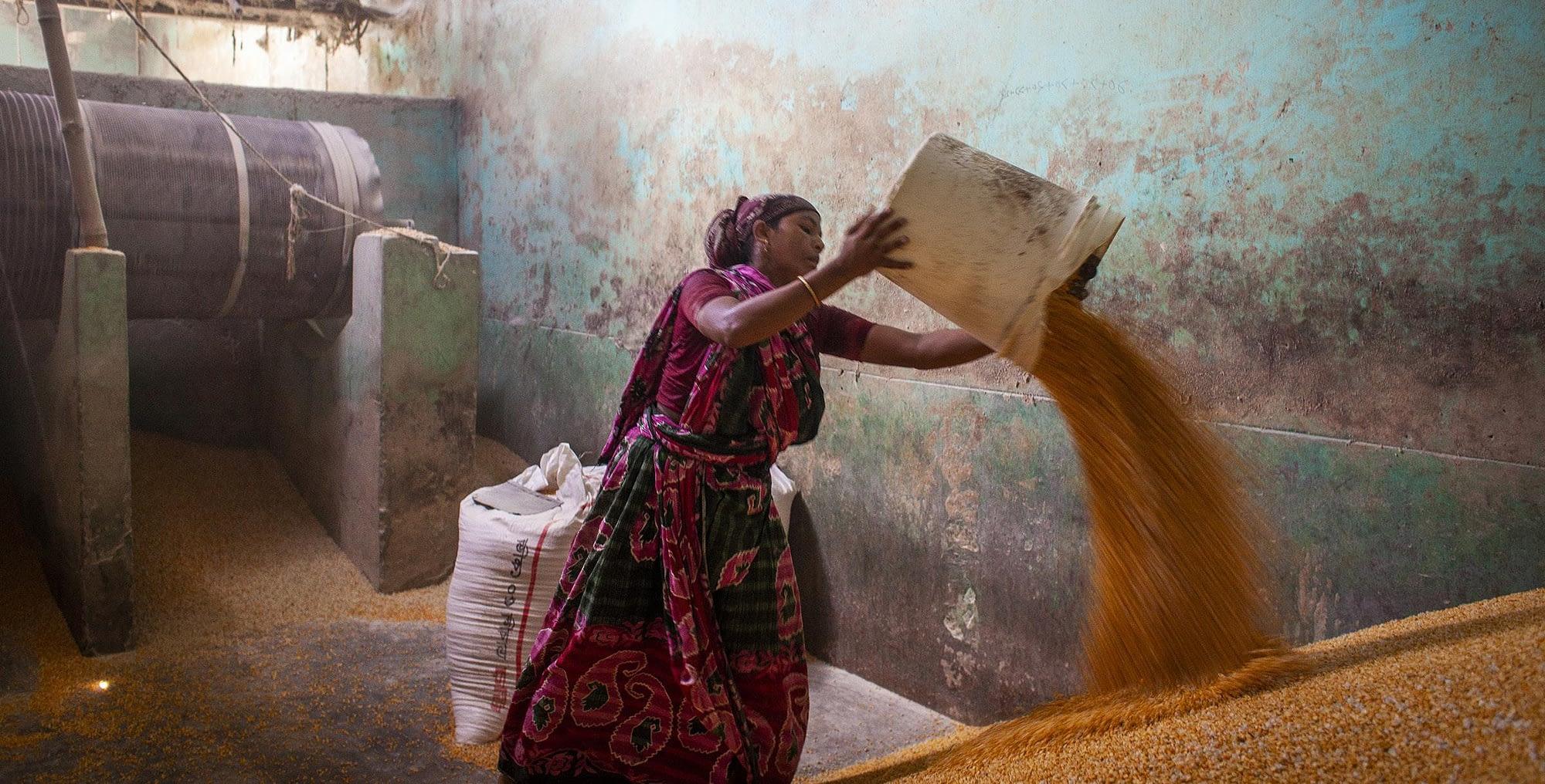 A farmer takes maize grain to a local reserve in Bangladesh. (Photo: Fahad Kaizer/FAO)