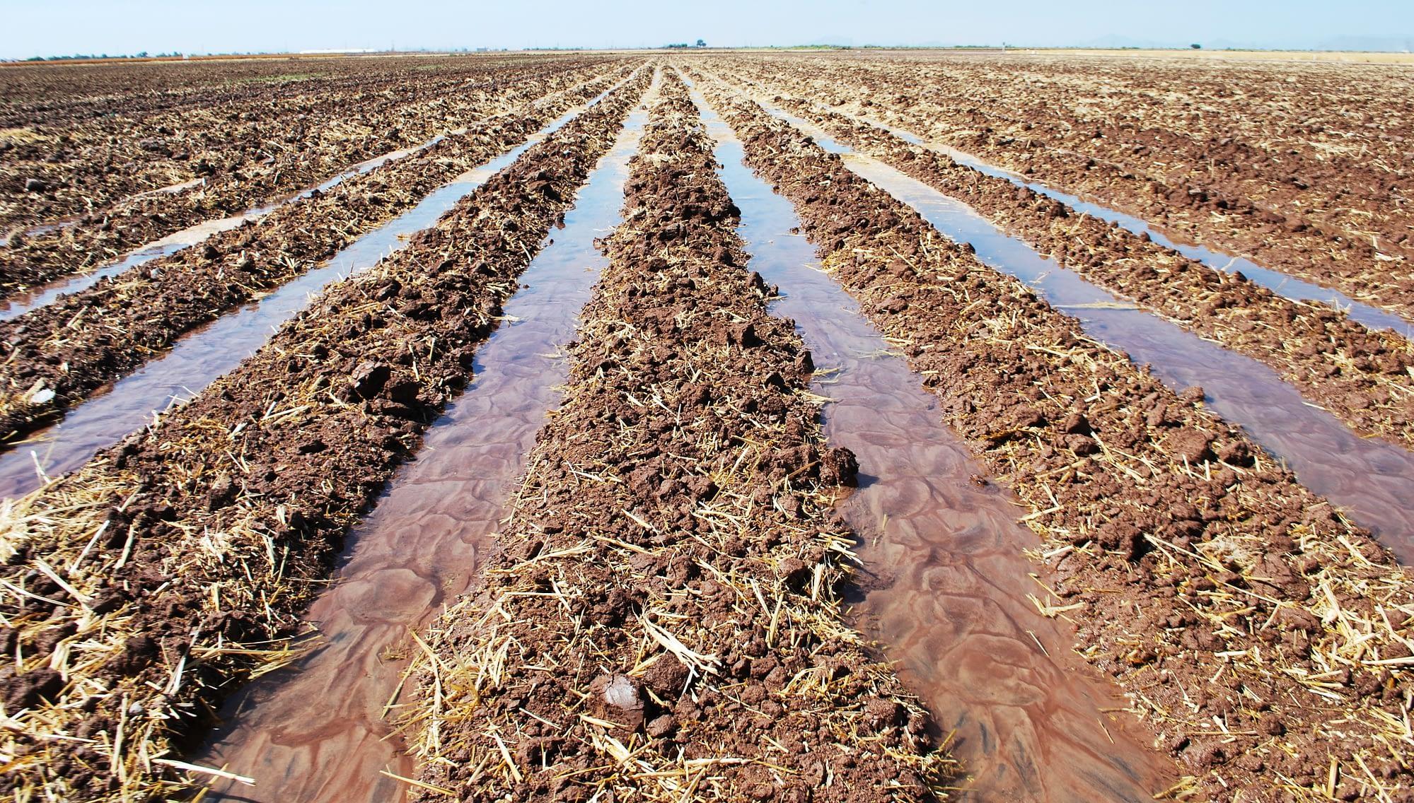 Irrigated fields in Cuidad Obregon.