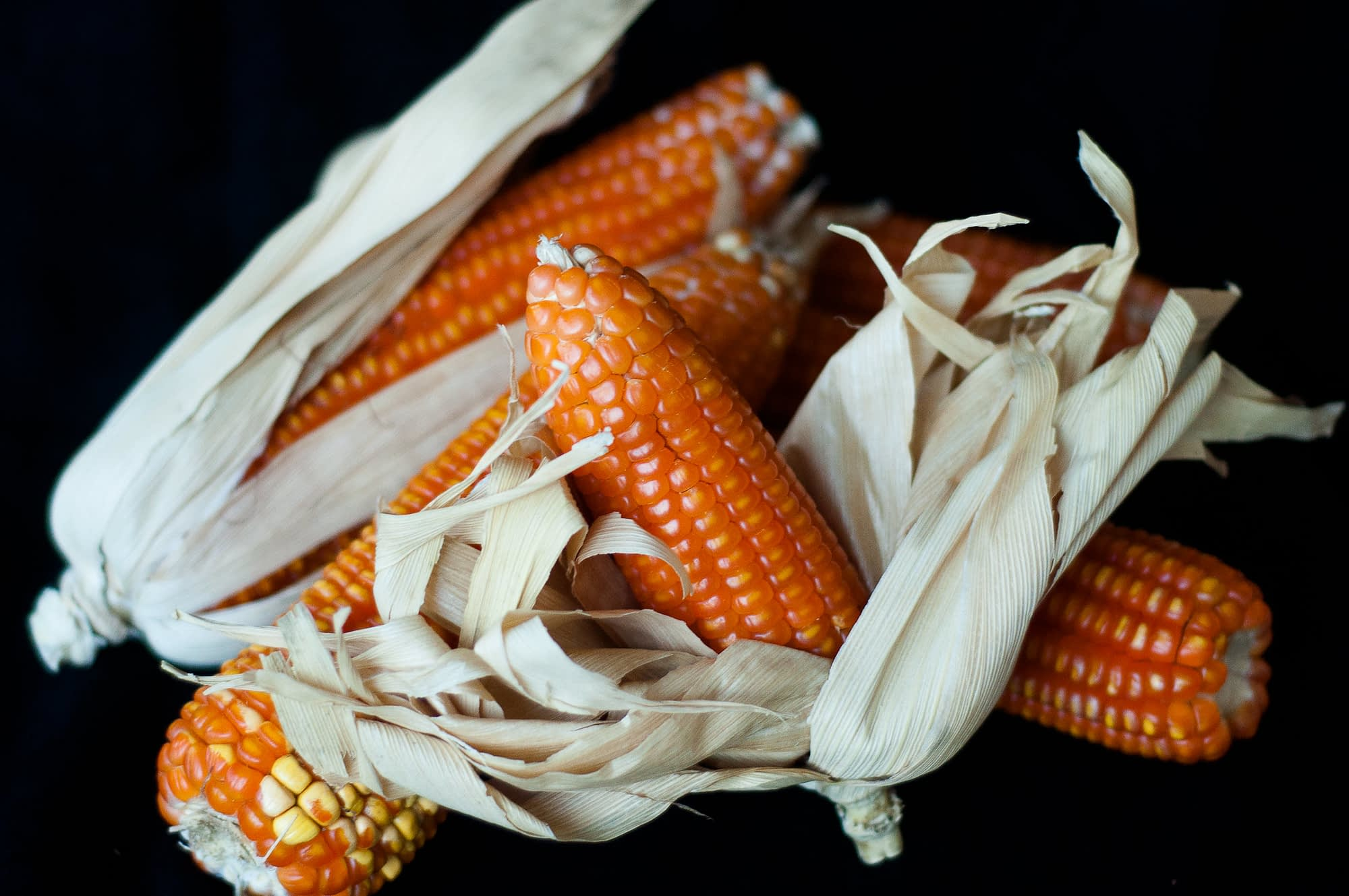 Unlike white maize varieties, vitamin A maize is rich in beta-carotene, giving it a distinctive orange color. This biofortified variety provides consumers with up to 40% of their daily vitamin A needs. (Photo: HarvestPlus/Joslin Isaacson)