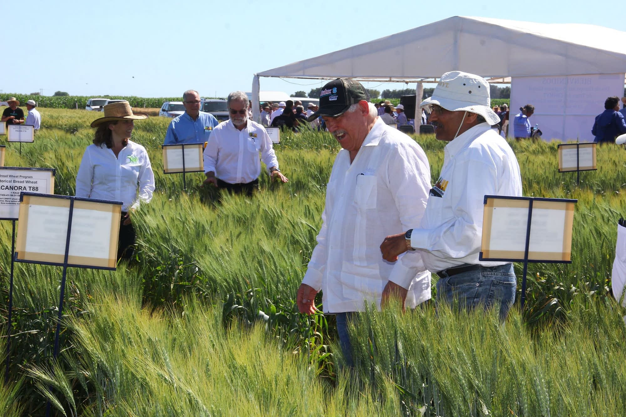 Secretary Villalobos (center) tours the wheat fields at the experimental station in Obregón with CIMMYT scientists. (Photo: Ernesto Blancarte)