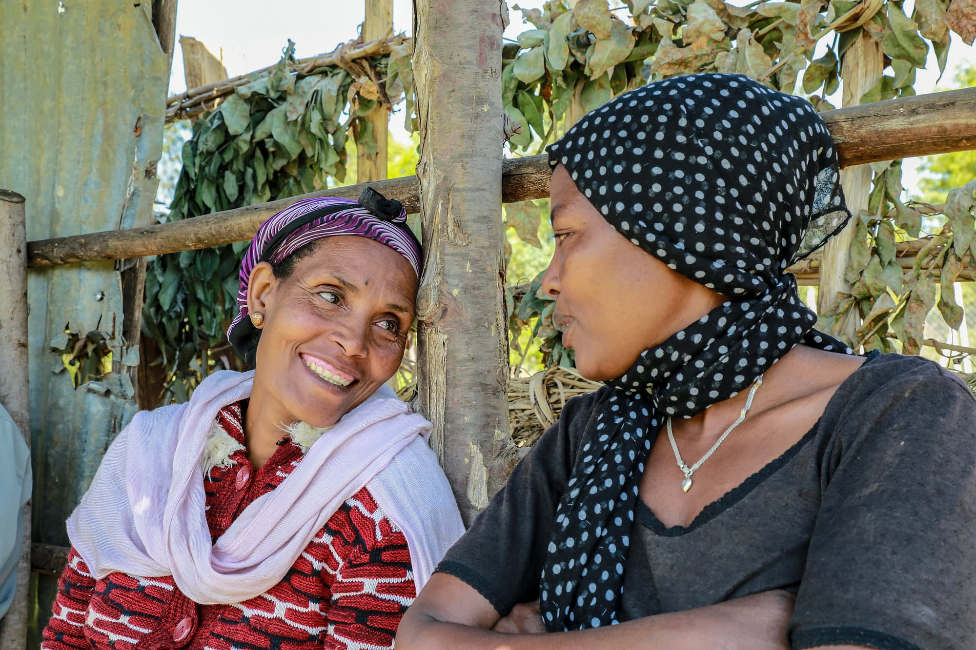 """Amarech Desta (left) is the chairwoman of Tembo Awtena, a womens' seed producer association in the Angacha district of Ethiopia's Southern Nations, Nationalities, and Peoples' Region (SNNP). As part of the Wheat Seed Scaling project, the group received early-generation seed and a seed thresher from CIMMYT. """"In 2016 we sold more than $7,400 worth of seed,"""" Desta said. """"Our success attracted 30 additional women farmers in 2017, bringing the total membership to 133."""" (Photo: Apollo Habtamu/CIMMYT)"""