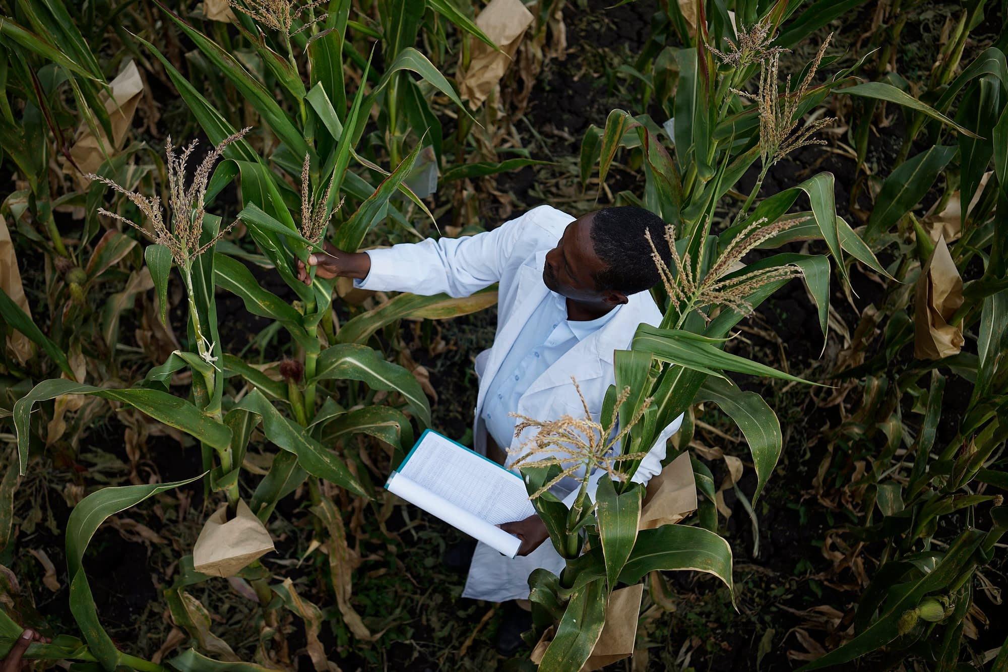 CIMMYT researcher Demewoz Negera at the Ambo Research Center in Ethiopia. (Photo: Peter Lowe/CIMMYT)