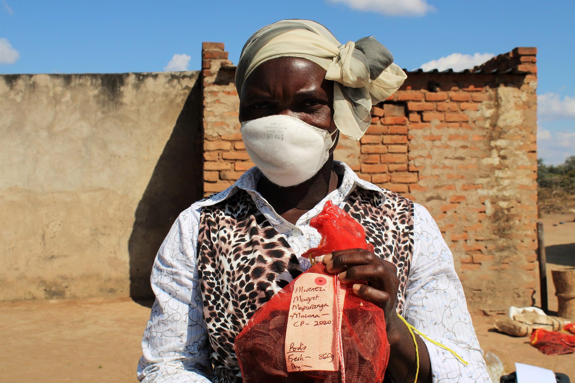 Margaret Mapuranga, a mother-trial farmer in Ward 6, Mwenezi district, shows a sample of velvet bean from the demonstration plot.
