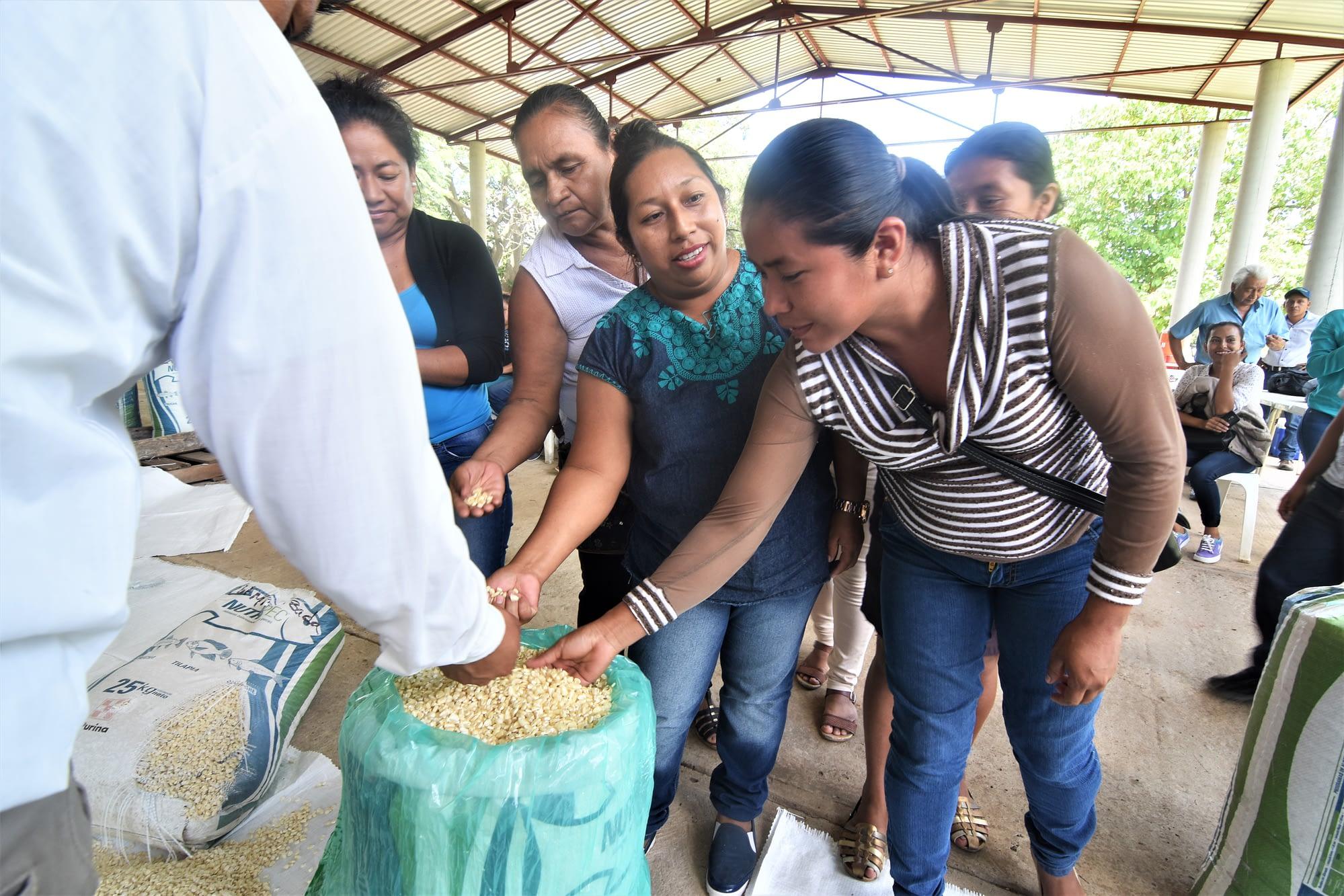 Women evaluate grain quality,