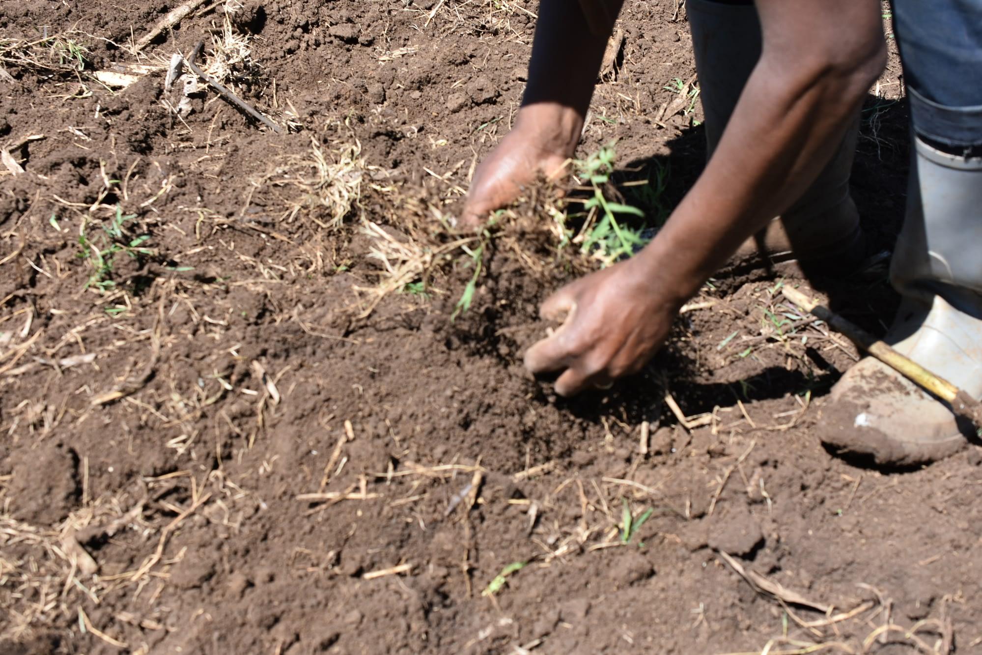 A farmer assesses soil on his plot in Ethiopia. (Photo: Simret Yasabu/CIMMYT)