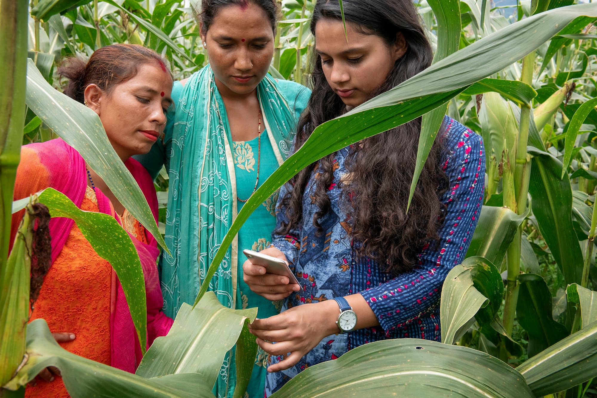 A researcher from the International Maize and Wheat Improvement Center (CIMMYT) demonstrates the use of a farming app in the field. (Photo: C. De Bode/CGIAR)