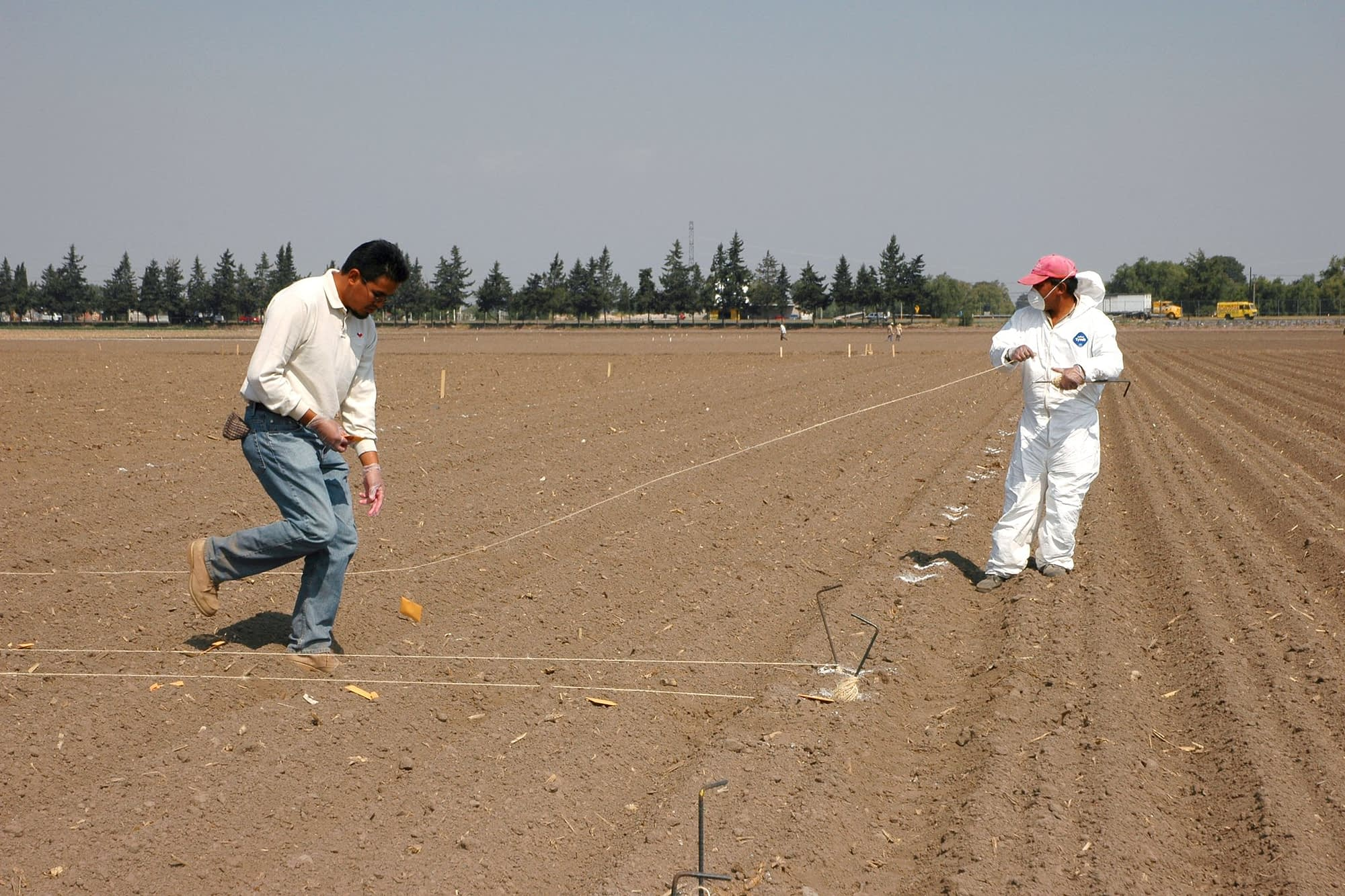 A CIMMYT researcher and a field worker lay out wheat seed for planting at the center's headquarters in Texcoco, Mexico. In experimental trials, hundreds or thousands of wheat lines are planted for evaluation, each in small quantities, and so they are carefully laid out and sown by hand. (Photo: CIMMYT)