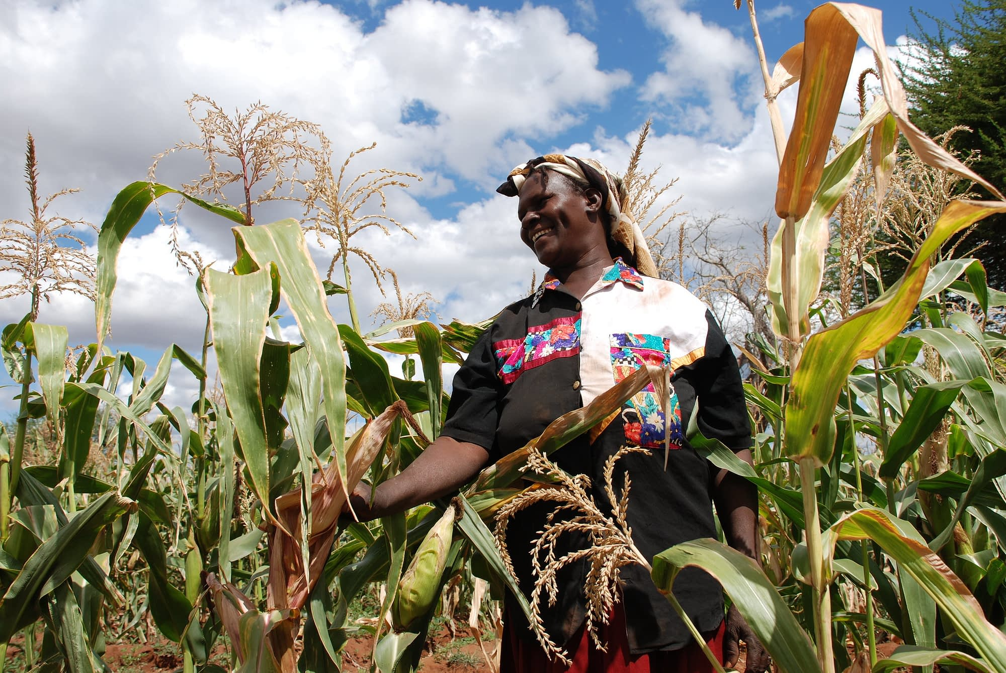 Drought tolerant maize route out of poverty for community-based seed producer, Kenya. (Photo: Anne Wangalachi/CIMMYT)