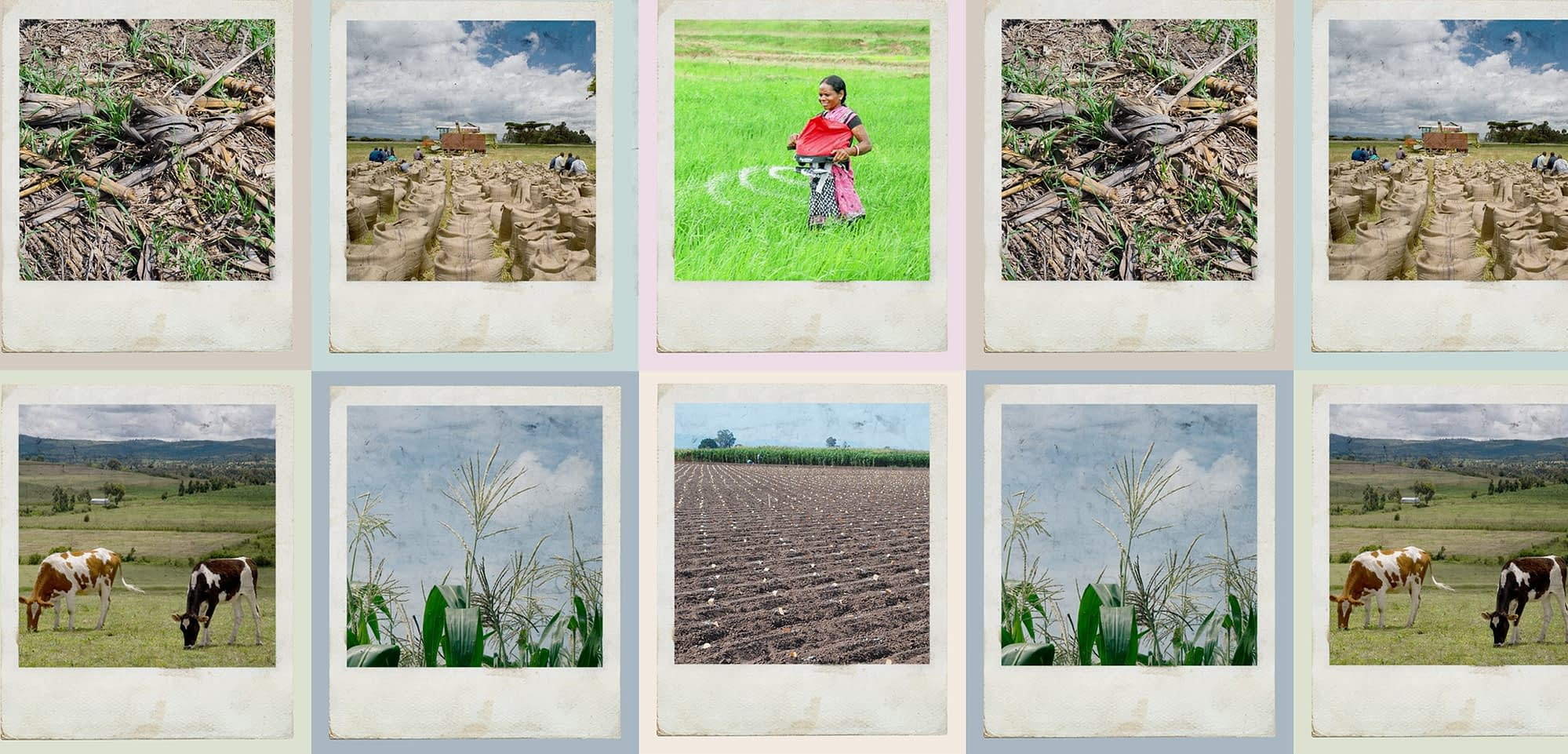 A collage of shows images relating to different stages of the nitrogen cycle. (Graphic: Alfonso Cortés/CIMMYT)