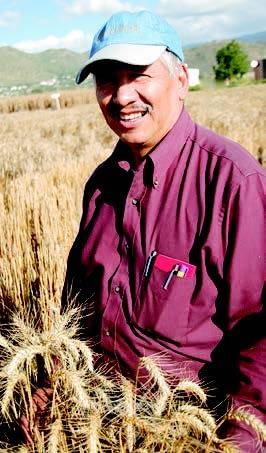 El Dr. Julio Huerta, patólogo experto en royas y científico adjunto (asignado por el Instituto Nacional de Investigaciones Forestales y Agropecuarias (INIFAP)/Investigador de Trigo y Avena INIFAP CIRCE CEVAMEX).